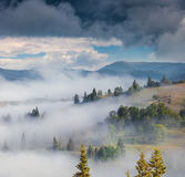 Foggy summer scene in the Carpathian mountains Stock Photography