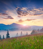 Foggy summer sunrise in mountains. Royalty Free Stock Photography
