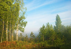 Foggy & sunny day. Foggy sunny morning. Place near the birch forest. Russia, Spring 2008 Royalty Free Stock Photography