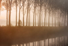 Foggy sunrise Royalty Free Stock Image