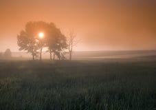 Foggy sunrise Stock Photos
