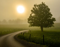 Foggy Sunrise  Great Smoky Mountain National Park Stock Image