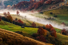 Foggy sunrise in Carpathian mountains. Cold morning fog in the rural area of Carpathian mountain range at sunrise. green grass and trees with red foliage on the Royalty Free Stock Images