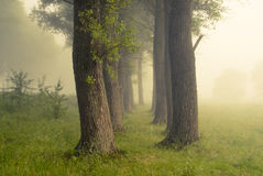 Foggy sunrise. Cold and foggy summer morning in Ukraine Royalty Free Stock Photography