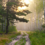 Foggy sunrise. Cold and foggy summer morning in Ukraine Royalty Free Stock Images