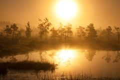 Foggy sunrise in the forest above the marshes Royalty Free Stock Image
