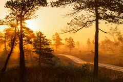 Foggy sunrise in the forest above the marshes Stock Images