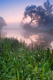 Foggy sunrise landscape over river Stock Image