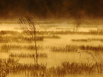 Foggy sunrise in Marsh. Foggy marsh in the morning with gold light Royalty Free Stock Photo