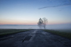 Foggy sunrise in a mountain. Trees Royalty Free Stock Images