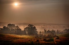 Foggy sunrise. A foggy sunrise in New Jersey Royalty Free Stock Images