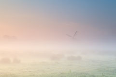 Foggy sunrise over Dutch farmland with windmill Stock Photography