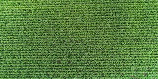 Aerial view over agriculture landscape with corn Royalty Free Stock Photos