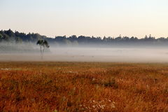 Foggy Sunrise over Grassy Meadow in Bialowieza National Park Stock Image