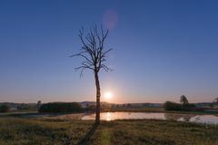 Foggy Sunrise over Lake, Leafless Tree and Nature Reserve in Ear stock image