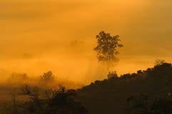Foggy sunrise with tree Stock Photos