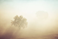Foggy sunrise Royalty Free Stock Photo