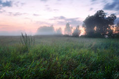 Foggy sunset in the field Stock Photography