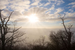 Foggy sunset over a winter forest Stock Photos