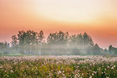 Foggy sunset in summer field Stock Photos
