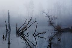 Foggy Swamp. Fallen trees lend an eerie feel to a swamp pond Stock Image