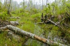 Foggy Swamp Stock Photography