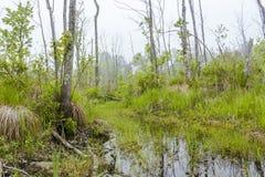 Foggy Swamp Royalty Free Stock Image