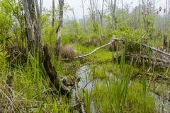 Foggy Swamp Royalty Free Stock Photo