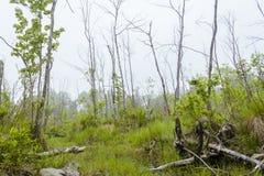 Foggy Swamp Royalty Free Stock Photography