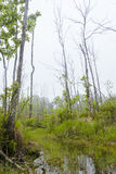 Foggy Swamp Stock Photos
