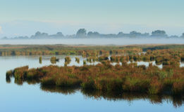 Foggy swamp Royalty Free Stock Photo