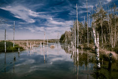 Foggy swamps in autumn. Cold melancholic landscape with water va Stock Photography