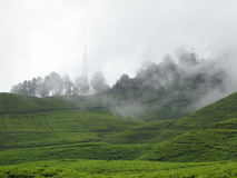 Foggy tea garden Stock Photos