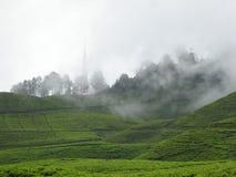Foggy tea garden stock photos