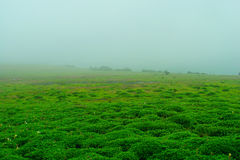 Foggy terrain. This is photo of foggy terrain at Kaas Plateau,India. During rainy season,whole plateau covers with clouds,being at the top of the moutain.There stock images