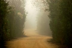 Foggy Trail. A Foggy dirt trail through nature preserve Stock Images