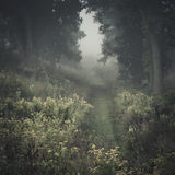 Foggy trail. In the early morning in late September Royalty Free Stock Photo