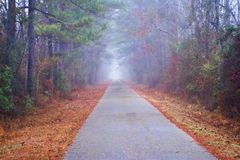 Foggy Trail Royalty Free Stock Image