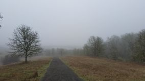 Foggy trail with oak tree forest Stock Image