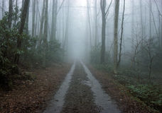 A foggy trail in the wilderness Stock Photos