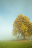 Foggy tree Royalty Free Stock Image