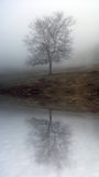 Foggy tree. Reflexive view of a lonely tree in a foggy morning stock photo