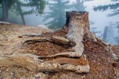 Foggy Tree Stump Royalty Free Stock Image