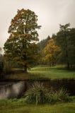 Foggy tree Stock Photo