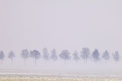 Foggy trees Royalty Free Stock Photography