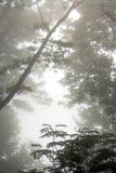 Foggy trees royalty free stock photography