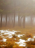 Foggy trees Royalty Free Stock Images