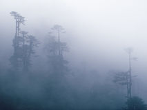 Foggy trees, Bhutan Stock Photography