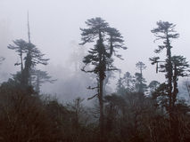 Foggy trees, Bhutan Royalty Free Stock Images