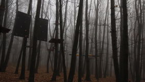 Foggy trees in a forest stock footage